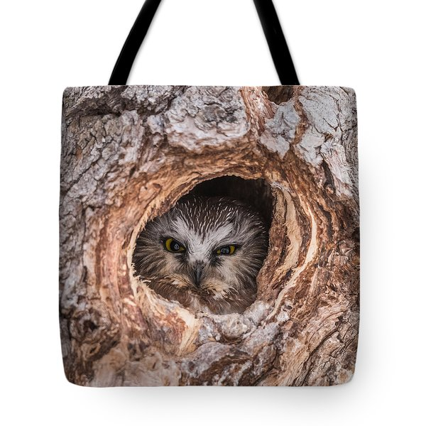 Saw-whet Secret Tote Bag by Yeates Photography