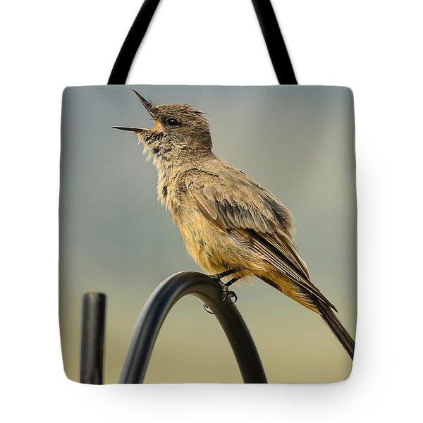 Say's Phoebe Singing Tote Bag by John Brink