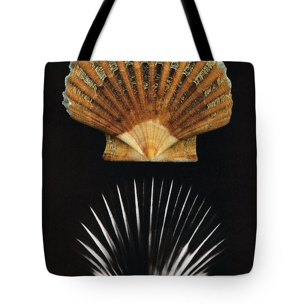 Scallop Shell X-ray Tote Bag by Photo Researchers