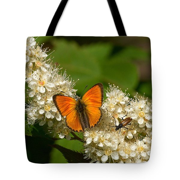 Tote Bag featuring the photograph Scarce Copper 2 by Jouko Lehto
