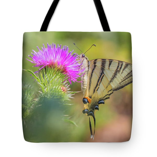 Scarce Swallowtail - Iphiclides Podalirius Tote Bag