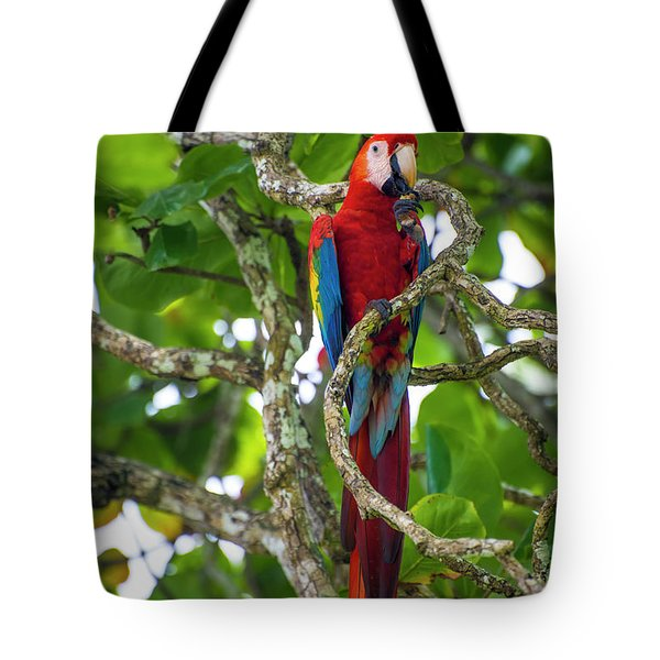 Tote Bag featuring the photograph Scarlet Macaw by David Morefield