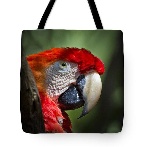 Scarlet Macaw Tote Bag by Roger Wedegis