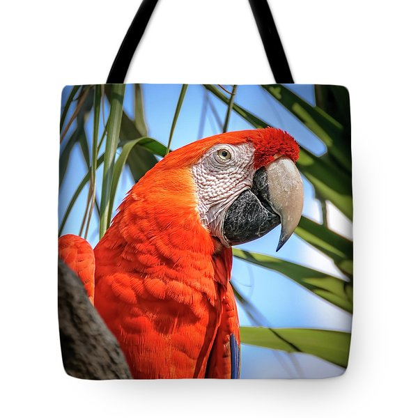 Tote Bag featuring the photograph Scarlet Macaw by Steven Sparks