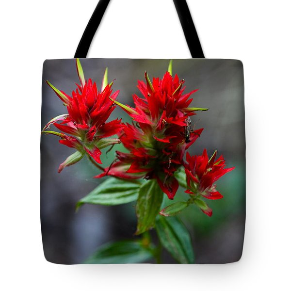 Scarlet Red Indian Paintbrush Tote Bag