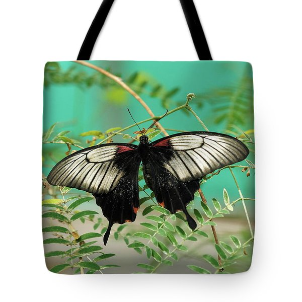 Tote Bag featuring the photograph Scarlet Swallowtail Butterfly -2 by Paul Gulliver