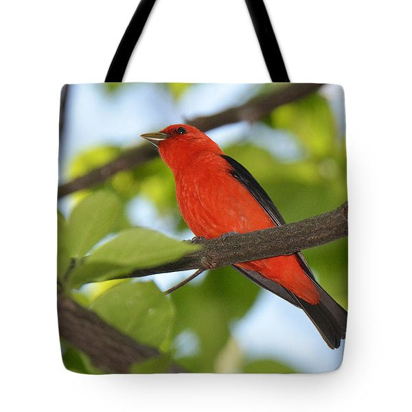 Scarlet Tanager Tote Bag