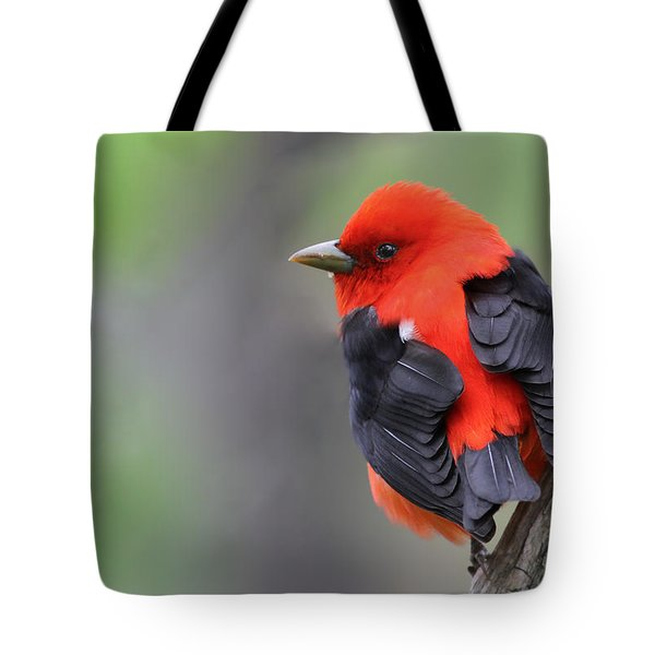 Scarlet Tanager Tote Bag by Mircea Costina Photography