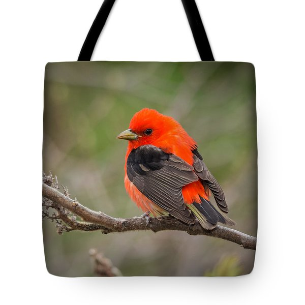 Scarlet Tanager On Branch Tote Bag