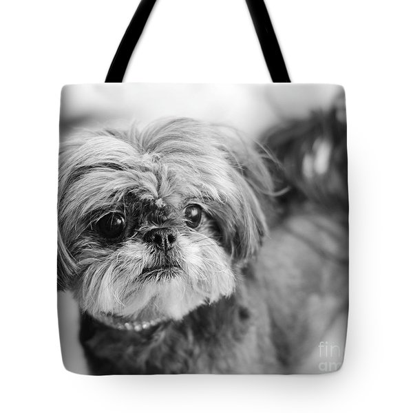 Tote Bag featuring the photograph Scarlett B And W by Irina ArchAngelSkaya