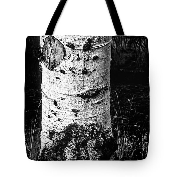 Scarred Old Aspen Tree Trunk In Colorado Forest Tote Bag by John Brink