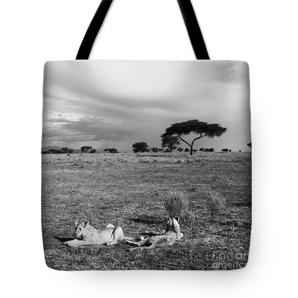 Lion Pause Tote Bag