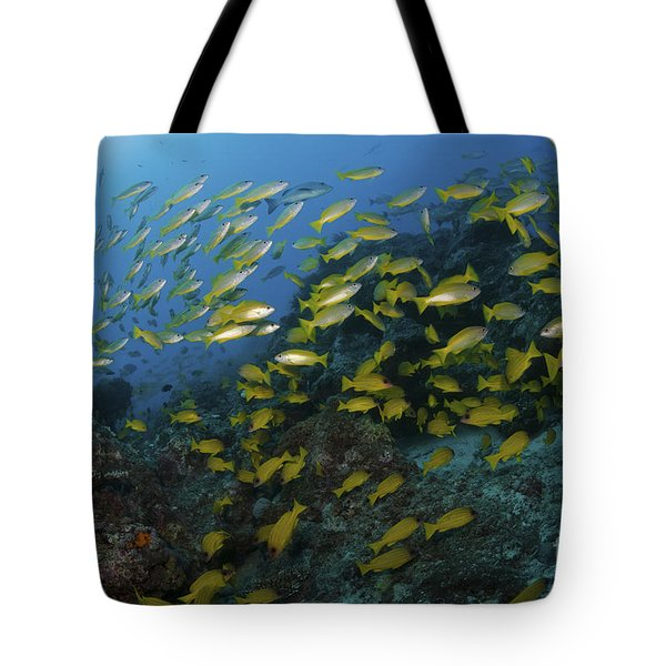 School Of Yellow Snapper, Great Barrier Tote Bag by Mathieu Meur