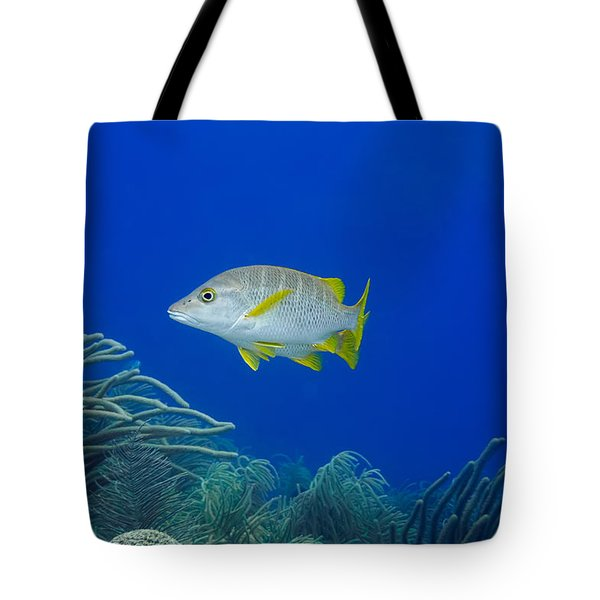 Tote Bag featuring the photograph Schoolmaster Snapper by Perla Copernik