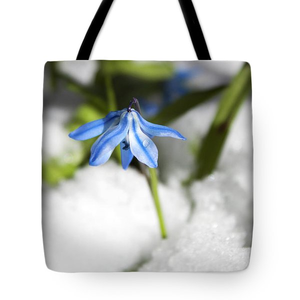 Scilla In Snow Tote Bag by Jeff Severson