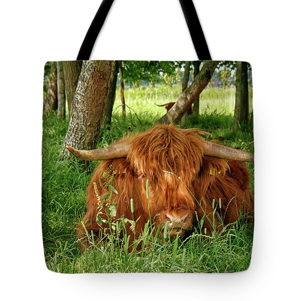 Tote Bag featuring the photograph Scottish Higland Cow by Patricia Hofmeester
