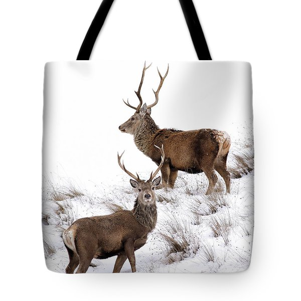 Scottish Red Deer Stags Tote Bag