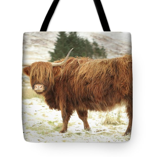 Scottish Red Highland Cow In Winter Tote Bag