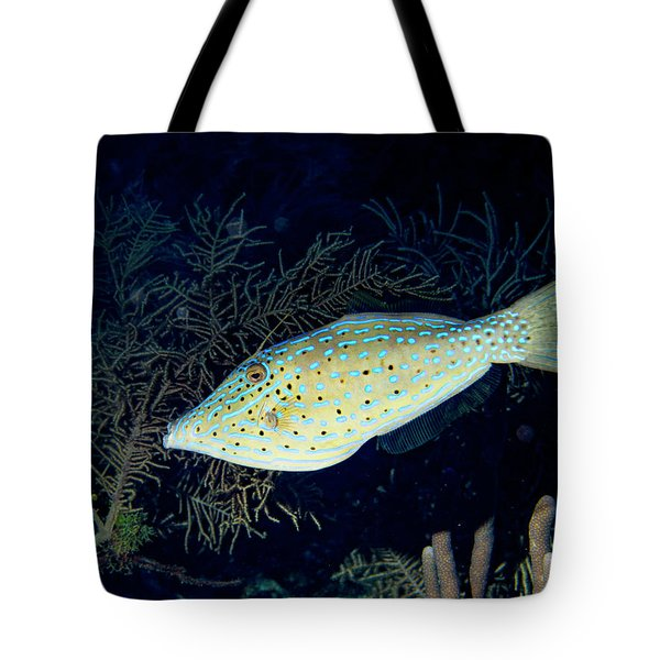 Tote Bag featuring the photograph Scrawled Filefish by Jean Noren