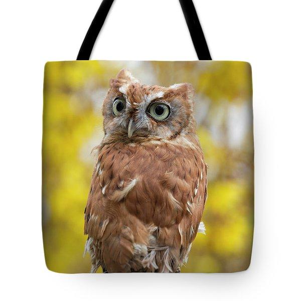 Screech Owl 1 Tote Bag