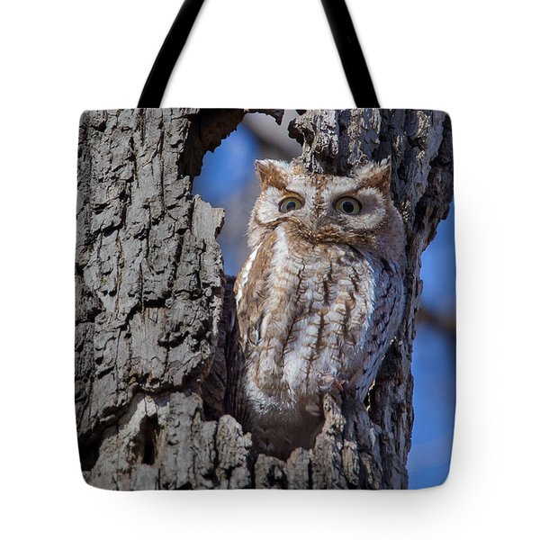 Tote Bag featuring the photograph Screech Owl #1 by Paul Schultz