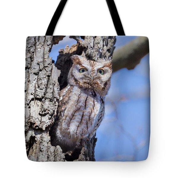 Screech Owl #2 Tote Bag