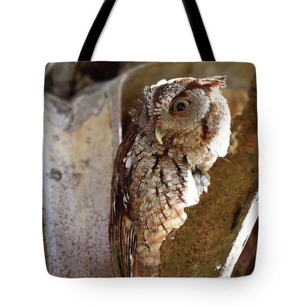 Tote Bag featuring the pyrography Screech Owl On The Lookout by Sally Sperry