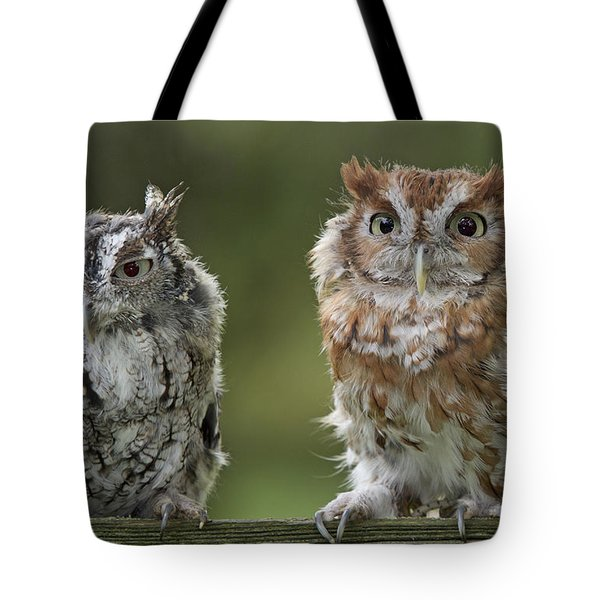 Screech Owl Pair Tote Bag