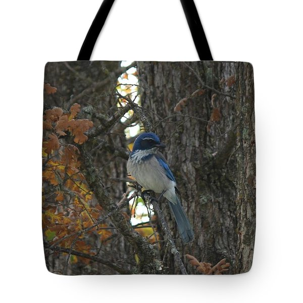 Scrub Jay - 3 Tote Bag by Christy Pooschke