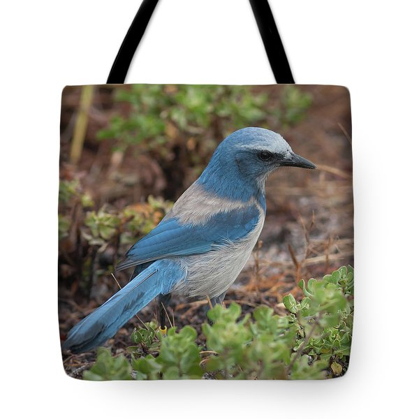 Scrub Jay Framed In Green Tote Bag by Paul Rebmann