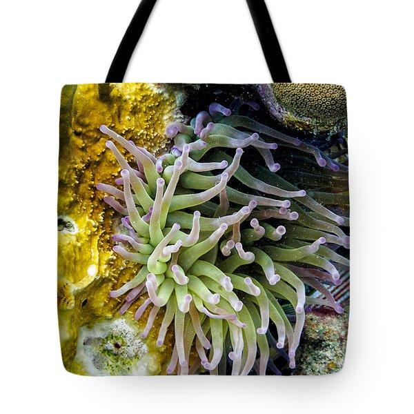 Sea Anemone And Squirrelfish Tote Bag
