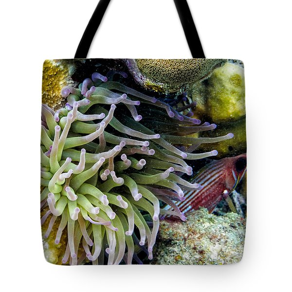 Tote Bag featuring the photograph Sea Anemone And Squirrelfish by Perla Copernik