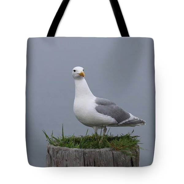 Sea Gull - 3  Tote Bag by Christy Pooschke