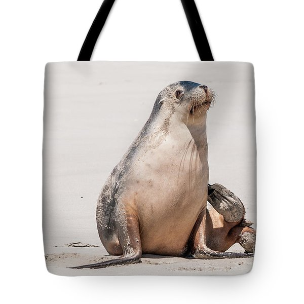 Sea Lion 1 Tote Bag