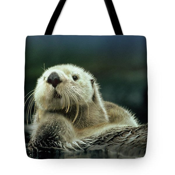 Sea Otter  Tote Bag by Tim Fitzharris