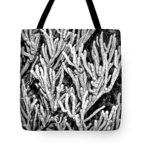 Sea Rod Coral Tote Bag by Perla Copernik