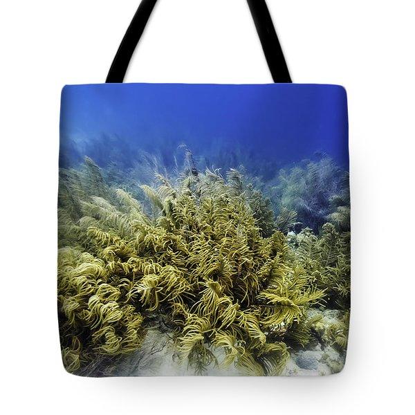 Sea Rod Corals  Tote Bag