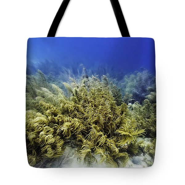 Tote Bag featuring the photograph Sea Rod Corals  by Perla Copernik