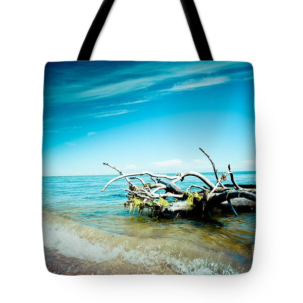 Seacost With Old Tree In Water Kolka Tote Bag