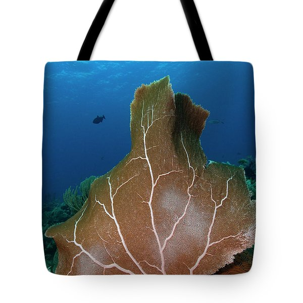 Tote Bag featuring the photograph Seafan by Rico Besserdich