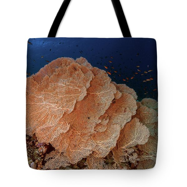 Tote Bag featuring the photograph Seafans In The Red Sea by Rico Besserdich