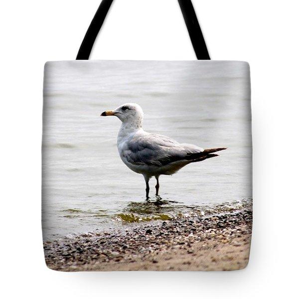 Seagull At Durand Tote Bag