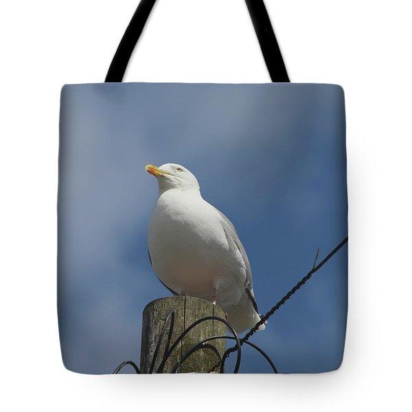 Seagull Perching. Tote Bag
