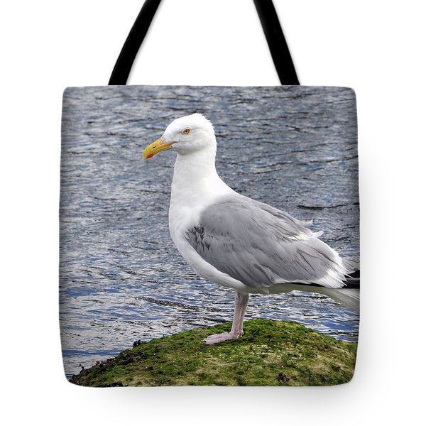 Seagull Posing Tote Bag by Glenn Gordon