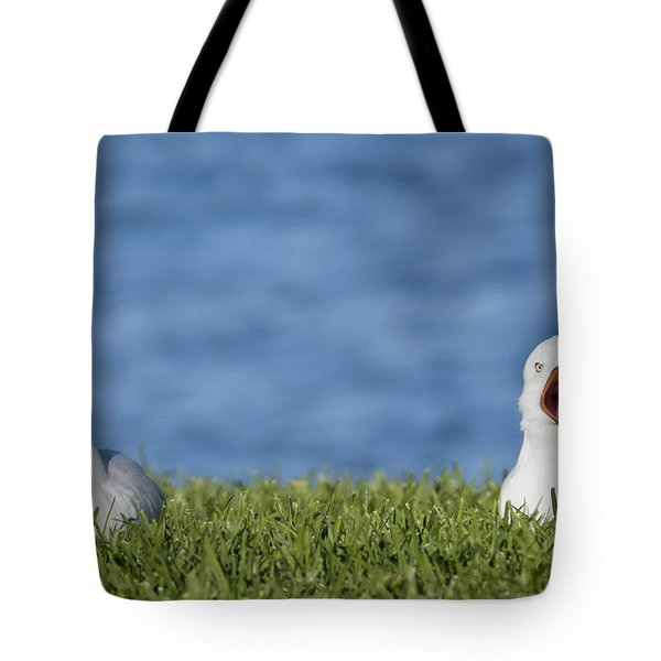 Tote Bag featuring the photograph Seagulls Afternoon Nap 01 by Kevin Chippindall