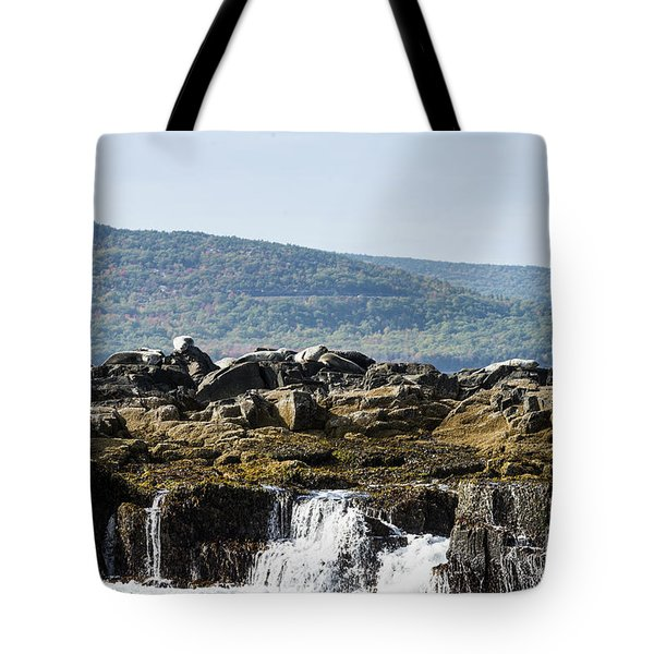 Tote Bag featuring the photograph Seal Island by Anthony Baatz