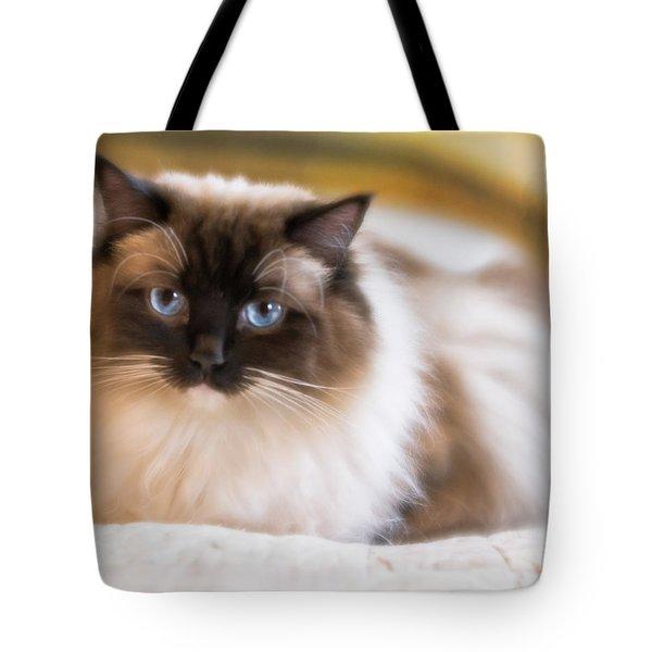 Seal Point Bicolor Ragdoll Cat Tote Bag