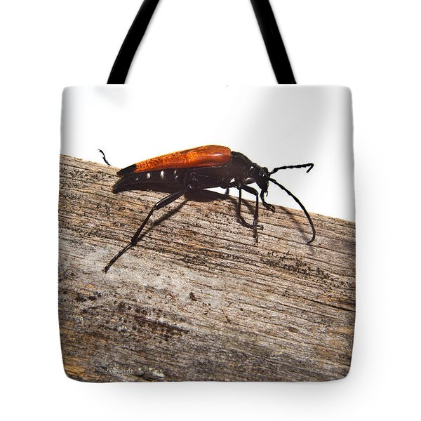 Searching For Food Tote Bag