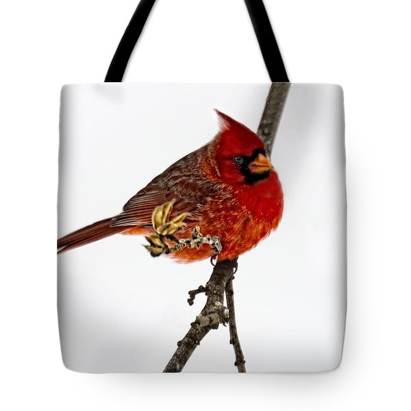 Second Cardinal Tote Bag by Skip Tribby