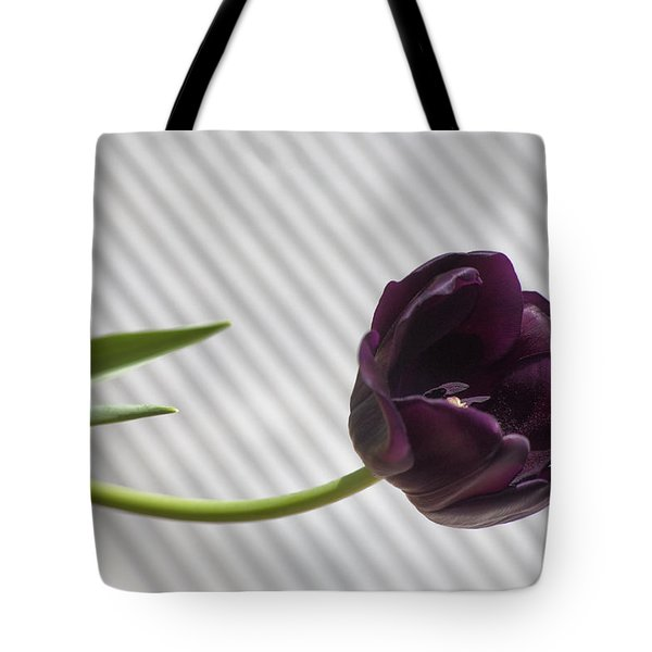 Seeking The Light Tote Bag
